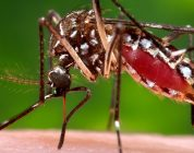First Choice ER Executive Medical Director, Dr. Mike Muzzarelli offers 10 tips for West Nile prevention