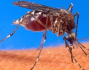 West Nile precautions are for all ages